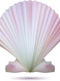cropped-shell-clipart.jpg